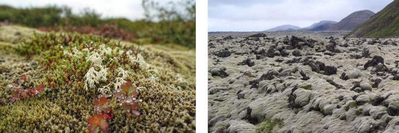 Island Momente Flechten und Moos