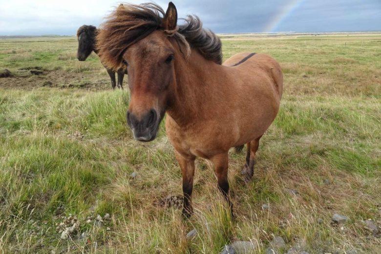 Isländer im Wind