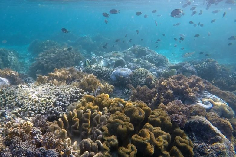 Komodo-Trip - bunte Korallen