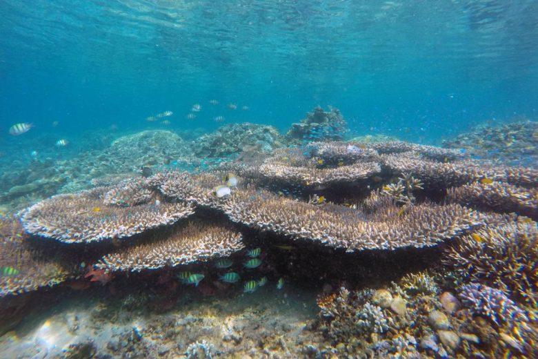 Komodo Nationalpark - bunte Korallen