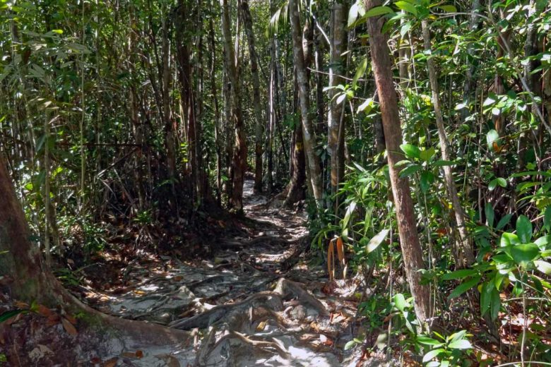 Dschungelpfad im Bako Nationalpark