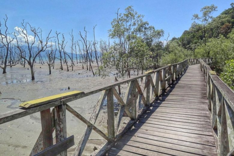 Plankenweg im Bako Nationalpark