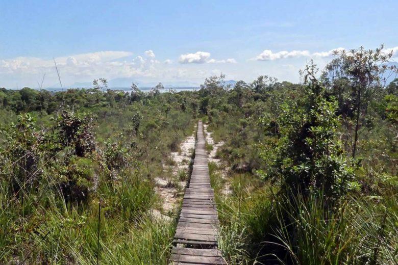 Bako Nationalpark Wanderung auf Plankenwegen