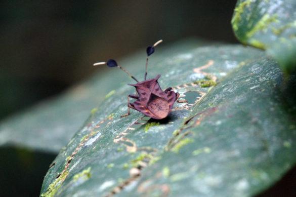 lustiger Käfer
