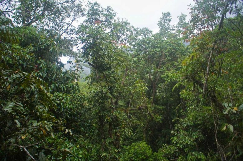 Ausblick vom Tree Top Tower