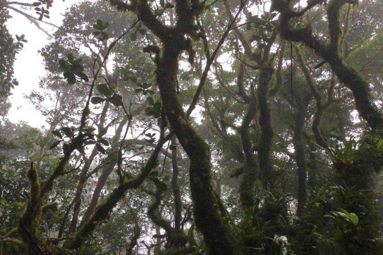 Nebelwald beim Trekking am Vulkan Maderas