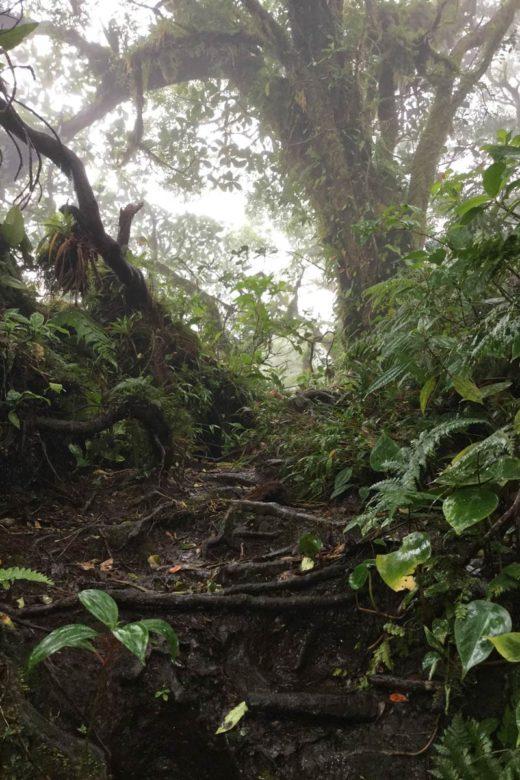 Trekking Vulkan Maderas - Wurzelwerk