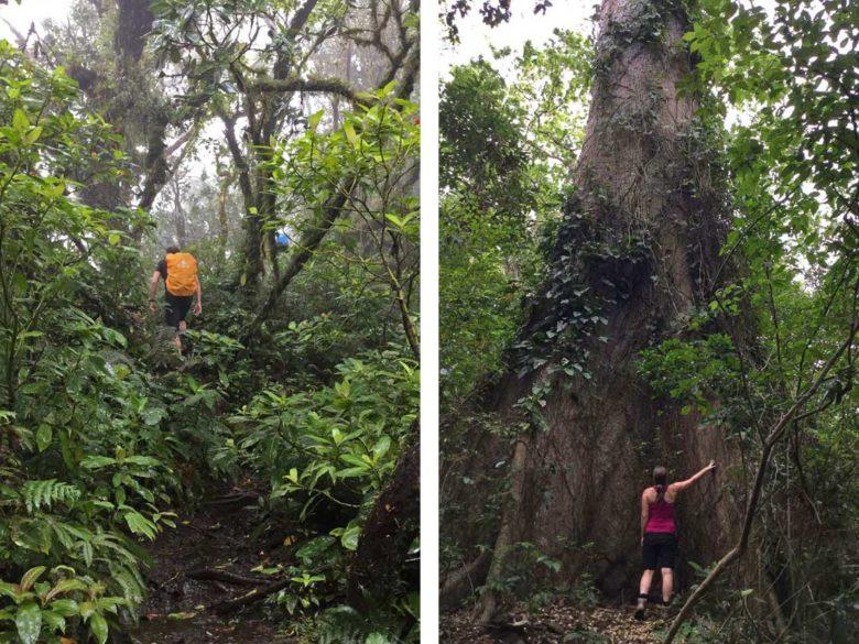 Trekking Vulkan Maderas - dichter Dschungel