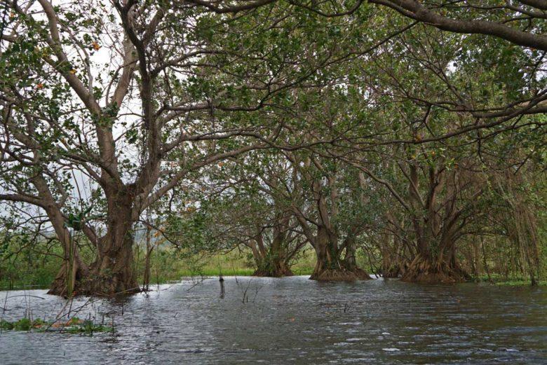 Kajaking Rio Istian Wurzel-Bäume