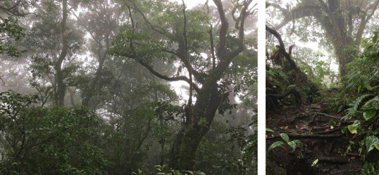 Trekking Vulkan Maderas auf Ometepe