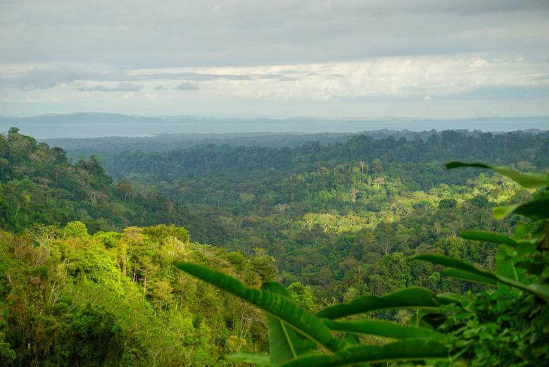 Blick über den Regenwald bis zum Golfo Dulce