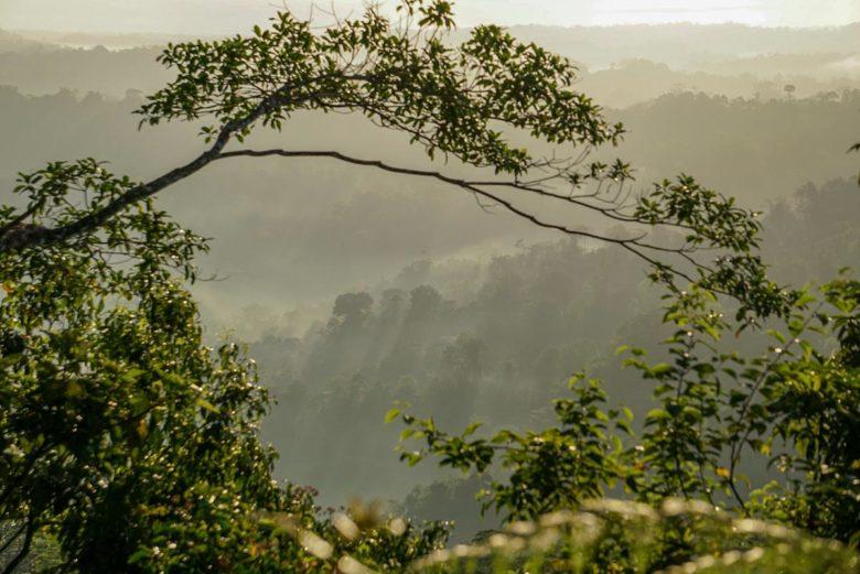 Nebelschwaden zu Sonnenaufgang im Regenwald