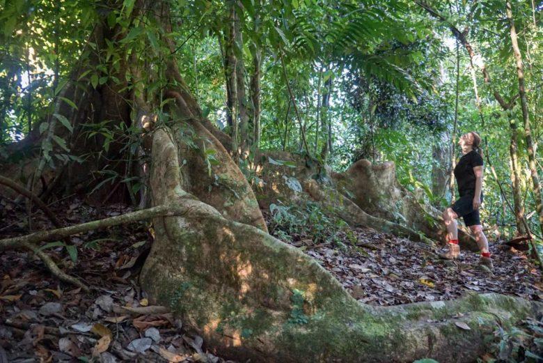 Der Urwaldriese und ich - Corcovado