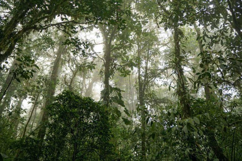 Nebelwald Santa Elena, Monteverde