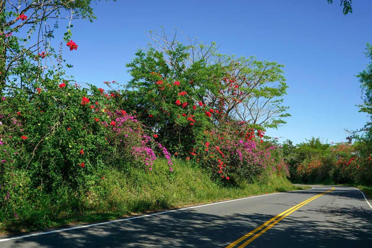Blühende Sträucher im Hochland von Panama