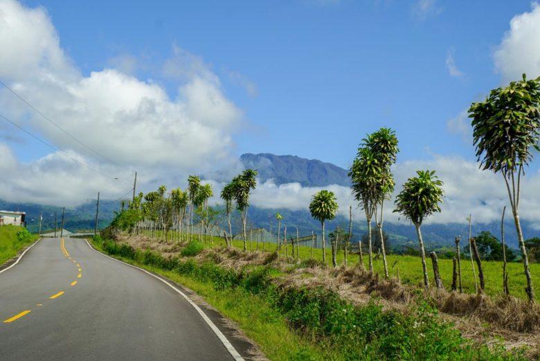 Roadtrip Panama Orange Blossom Road