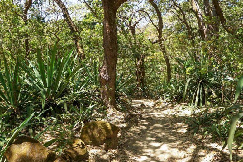 Naturbelassener Wanderweg im Rincon de la Vieja Nationalpark