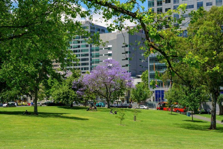 Melbourne Australien Jacaranda Baum