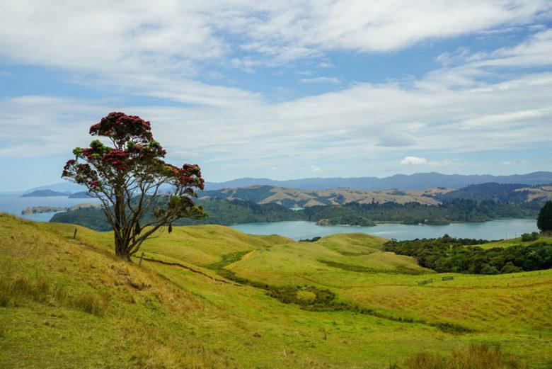 Coromandel Peninsula Neuseeland Roadtrip