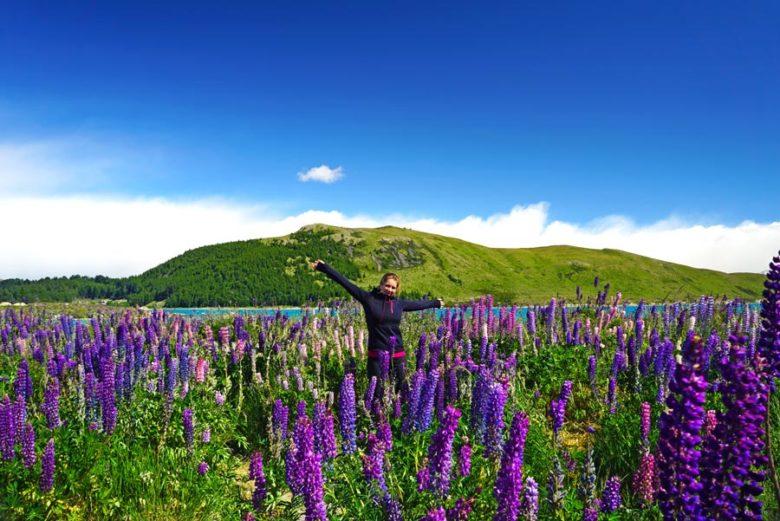Lupinenfeld Lake Tepako Südinsel Neuseeland