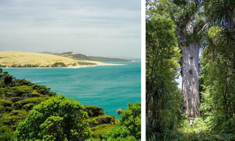 Sanddünen und Kauri Forest Neuseeland