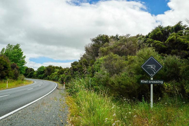 Kiwi-Schild Northland