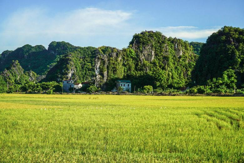 Reisfelder - Ninh Binh Vietnam