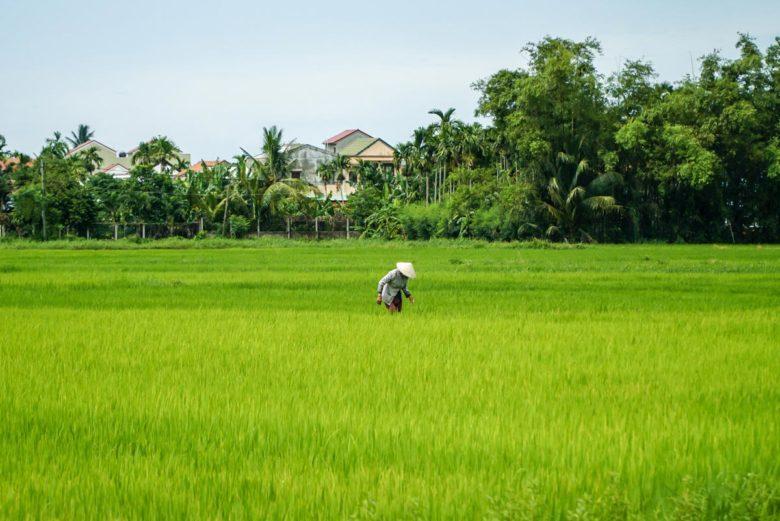 Reisfelder Vietnam Reise