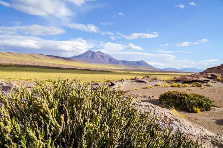 Altiplano Atacama Wüste
