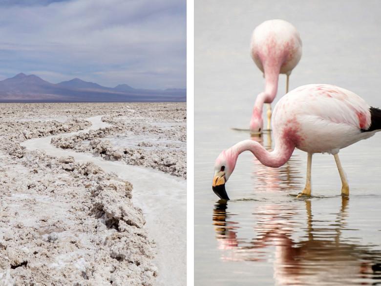 Laguna Chaxa - Atacama Wüste