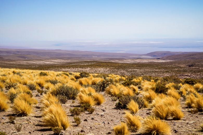 Blick auf Salzwüste Salar de Atacama