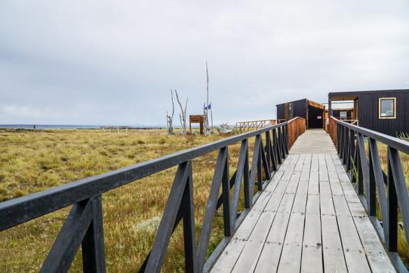 Chile Feuerland Parque Pingüino Rey