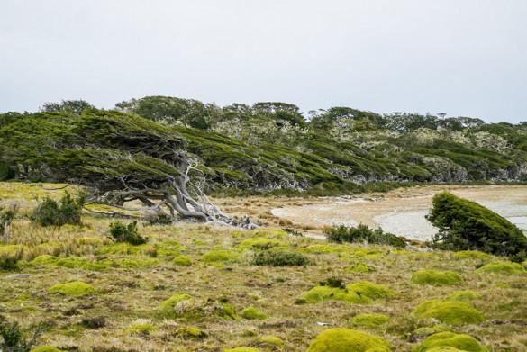 Chile Feuerland Südbuchenwälder im Wind