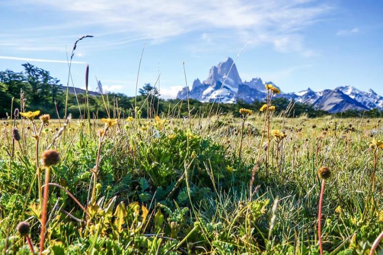 Patagonien blühende Wiese El Chaltén