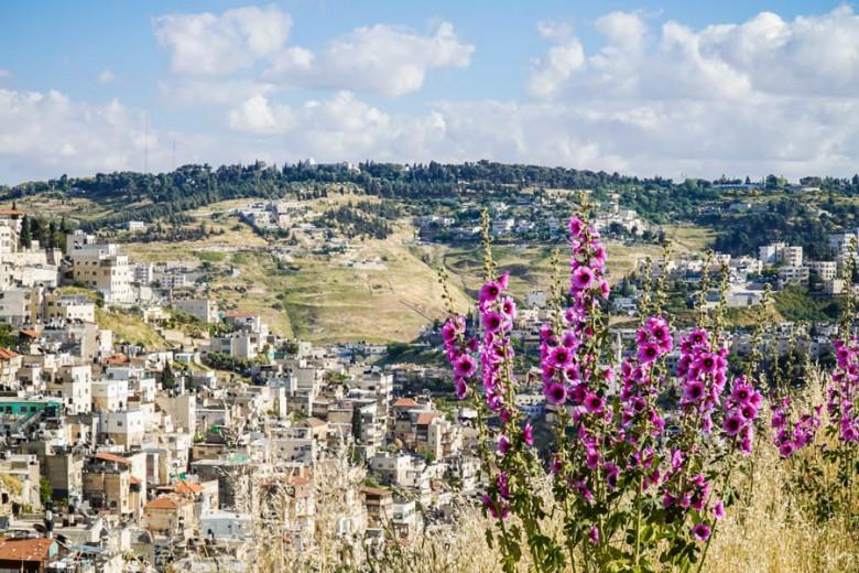 Jerusalem Blumen Kidrontal