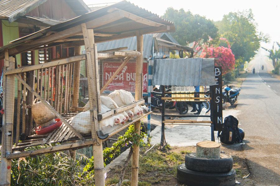 Flores Indonesien Hühner