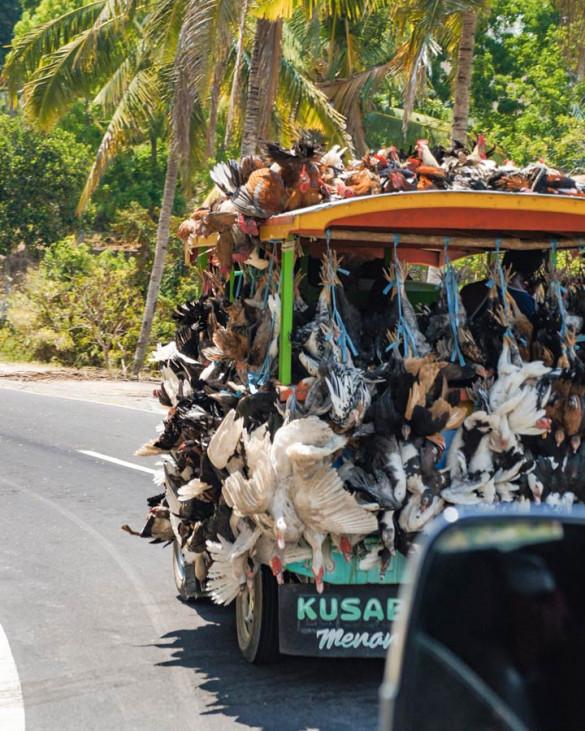Flores Indonesien Transport