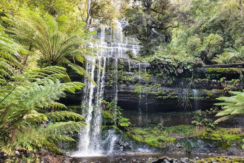 Mount Field NP - Russel Falls Tasmanien